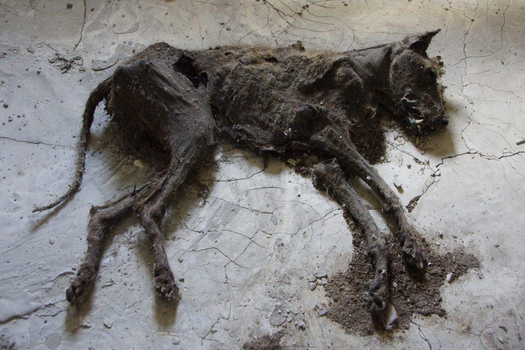 Zmumifikowany pies na poddaszu bloku przy Łesi Ukrainki 56 / Fot. Sebastian Marciak, marciak.pl