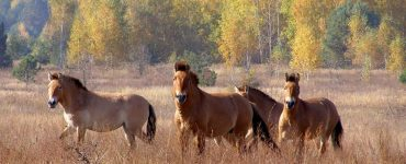 Fot. Stanislav Gumenyuk / dazv.gov.ua