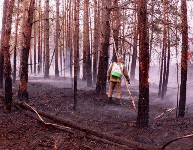 Fot. cotiz.org.ua/ CC BY 4.0